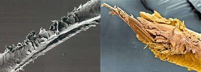 Истонченный волос человека под микроскопом