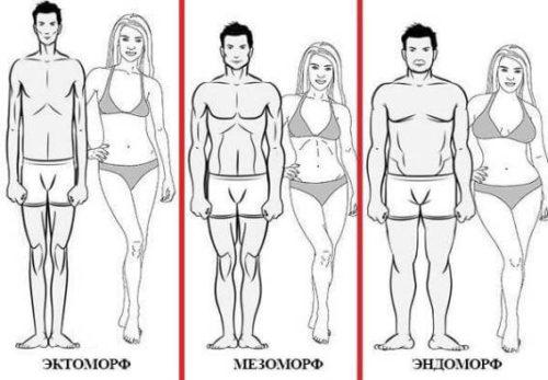 Тип строения тела