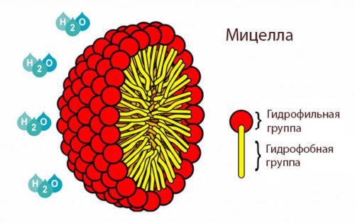 Строение мицелл